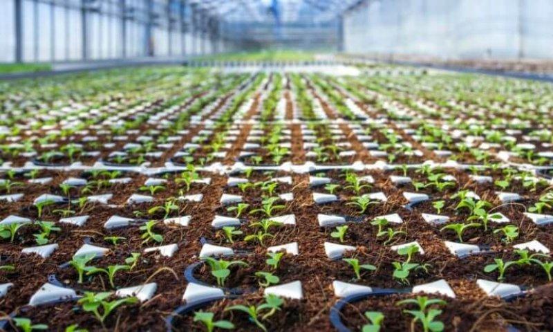americas shrinking farms x
