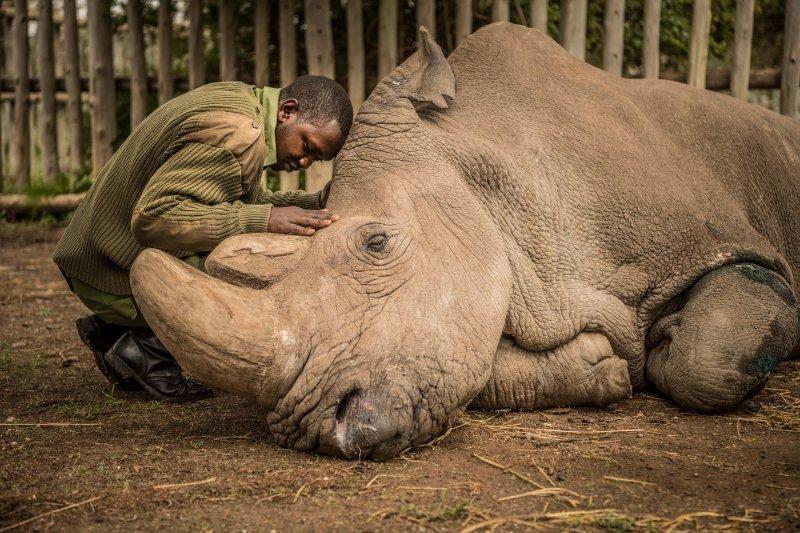 ami vitale rhino top photos