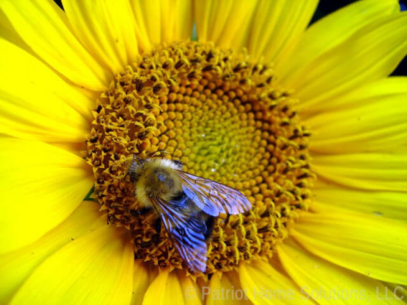 attract honeybees north carolina