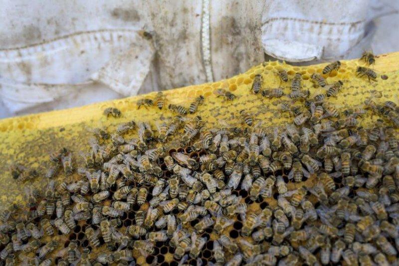 bees size custom crop x