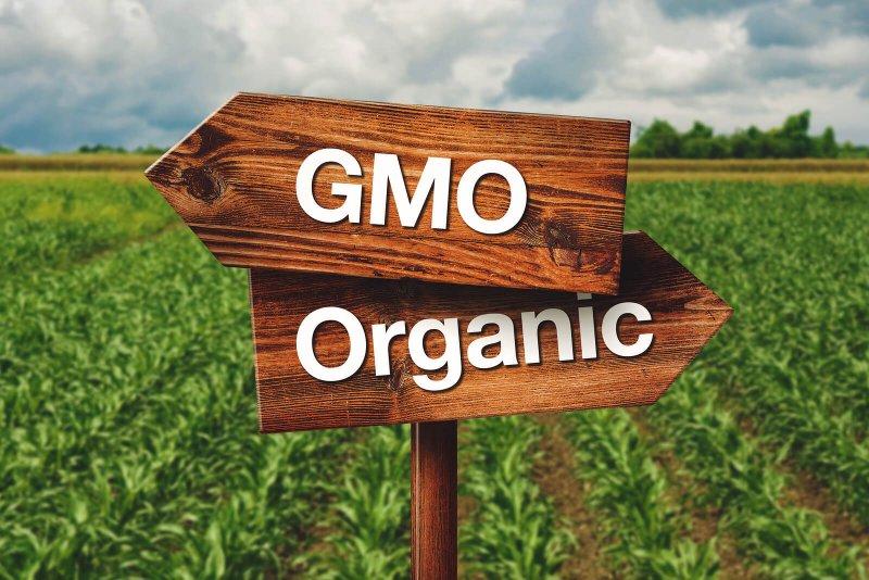 bigstock Gmo Or Organic Farming Directi