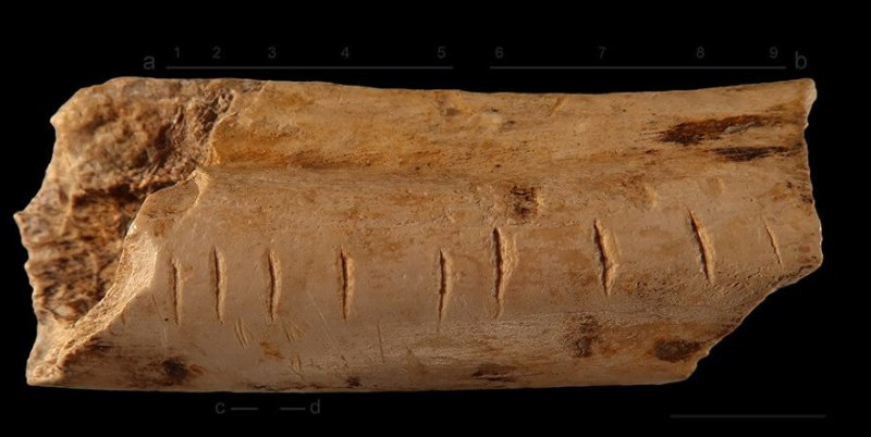 Prehistoric accounting? Markings made on a hyena bone by a Neanderthal might have recorded numerical information. Credit: Nature