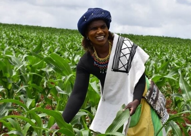 Nontoko Mgudlwa, a smallholder farmer who planted TELA maize for the first time since its release in South Africa. Credit: B. Wawa/CIMMYT