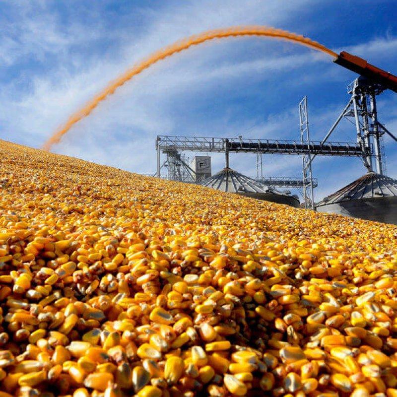 cornharvest custom c d d abc a fdfc ba f s c e