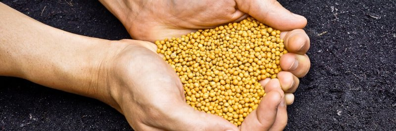 difference between slow release and controlled release fertiliser blog wide
