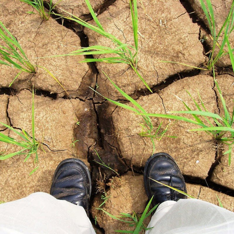 drought ground e