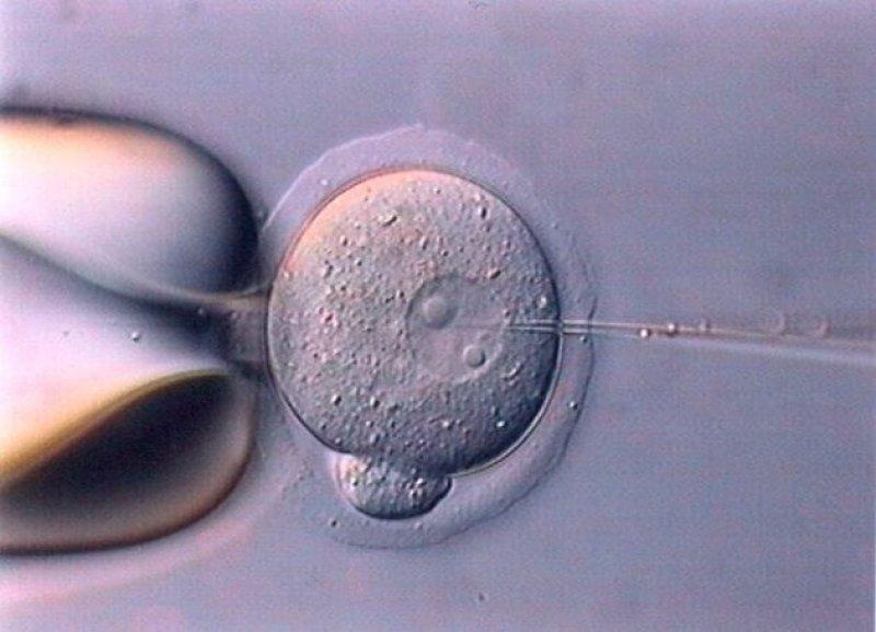 4-30-2019 embryo x