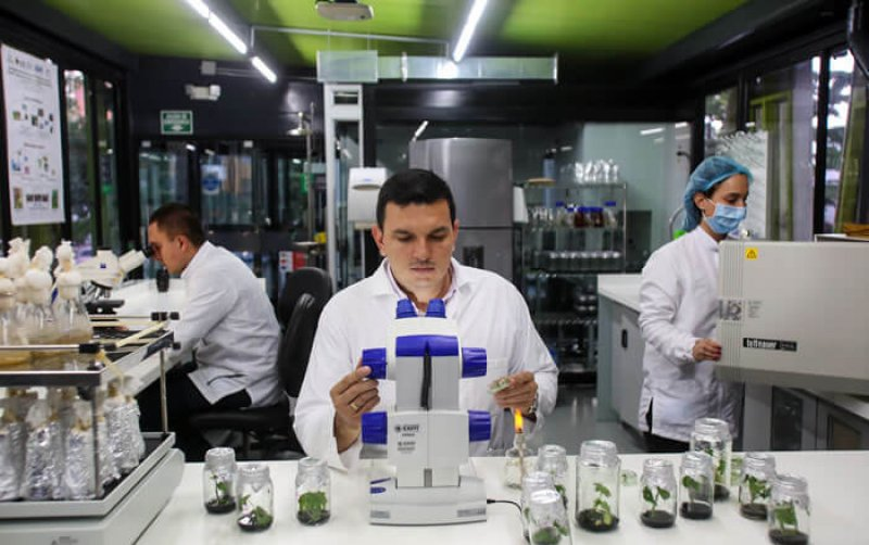 For lead researcher, Dr. Diego Villanueva (in the center of the image), the use of transgenic seeds will allow us to face sustainability challenges generated by climate change. Credit: EAFIT