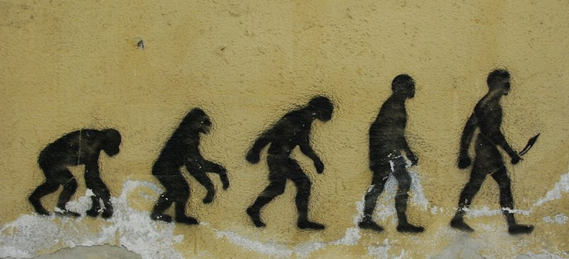 evolution on a wall