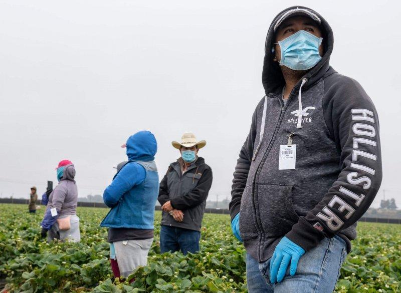 Jose Suarez, a strawberry farmworker. Credit: David Rodriguez/The Salinas Californian