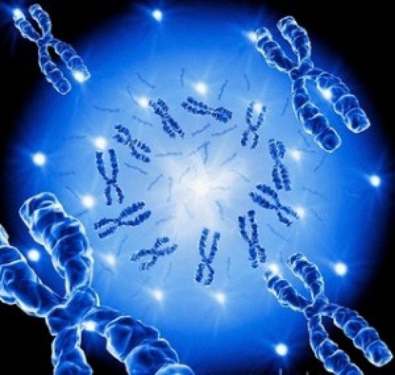 genetic profile x