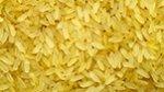 golden rice x