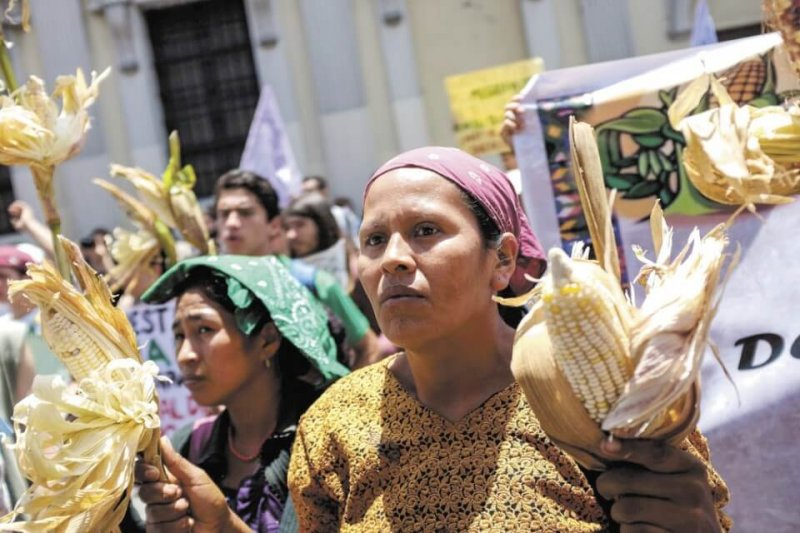 guatemala protest ley monsanto hoy ni