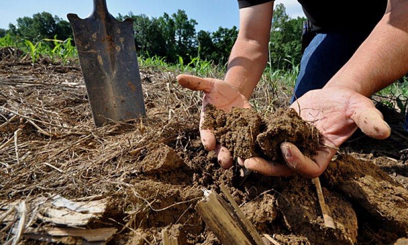 hands in soil crop