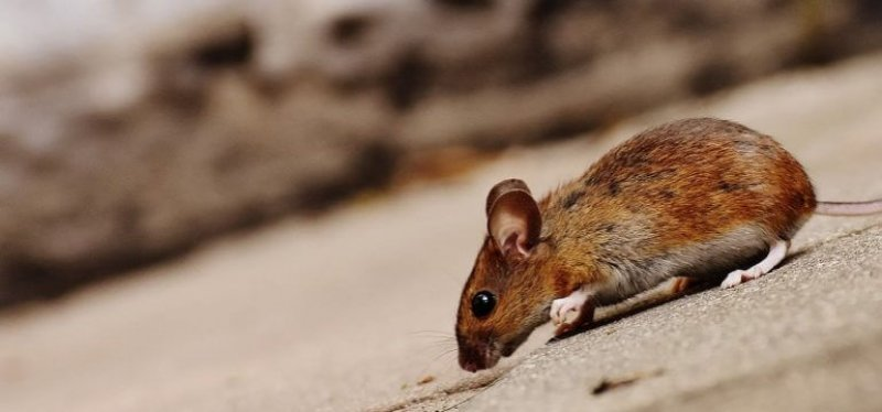how to prevent mice from entering your home x