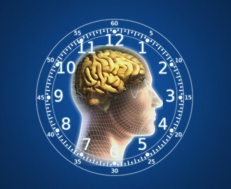 human brain body clock wallpaper
