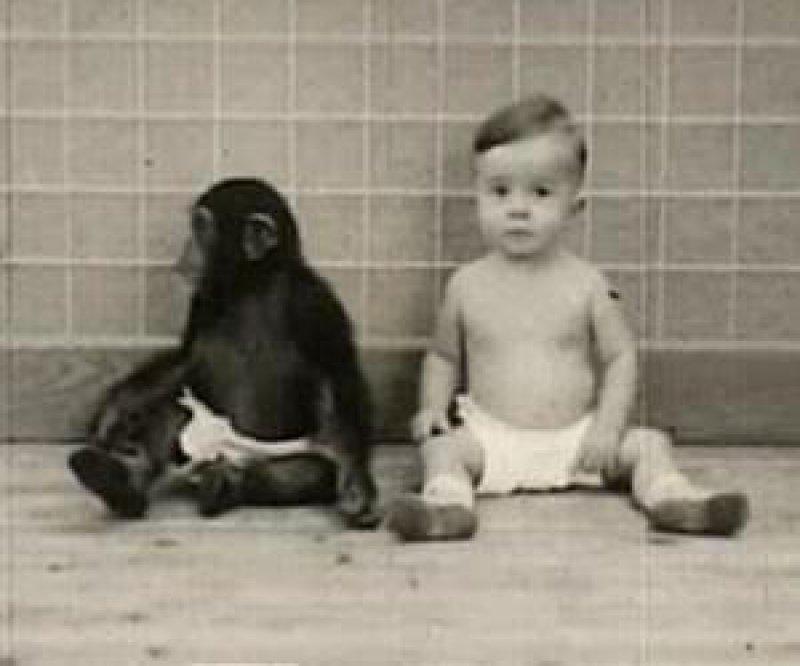 human child chimpanzee baby lg