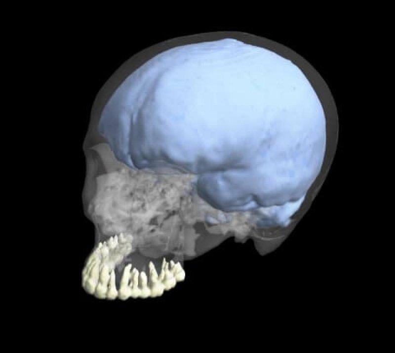 human evolution brain teeth