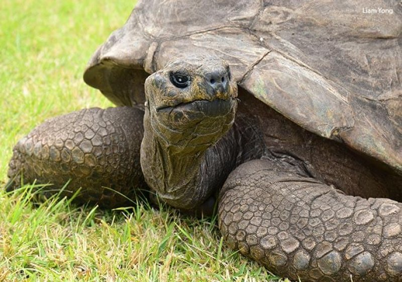 Meet Jonathan, the world's oldest land animal at 188-189 years old. Credit: Guiness Book of World Records