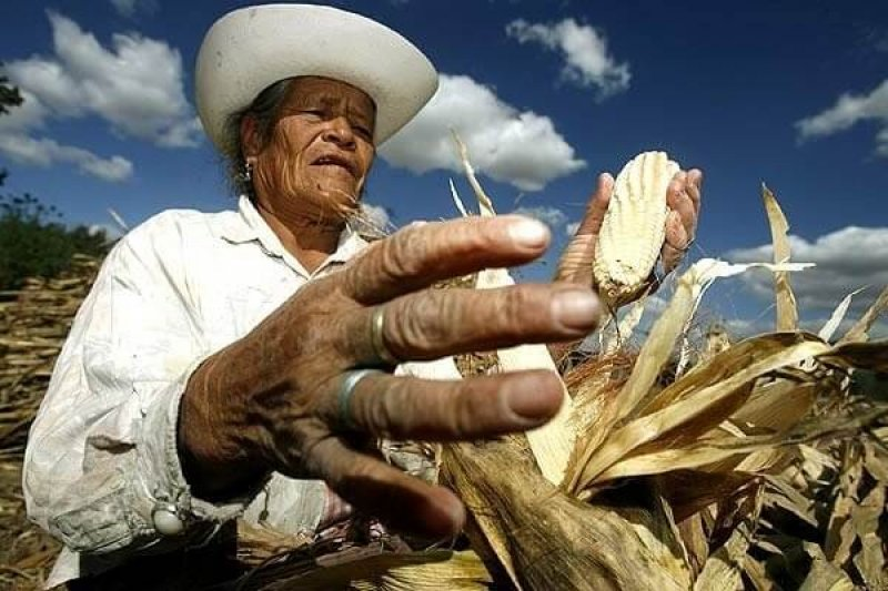 Viewpoint: Mexican government undermining science and agriculture