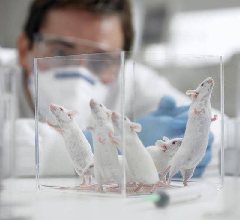 mice laboratory