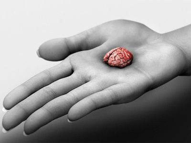 mini brains
