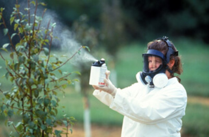 mng pesticides bees