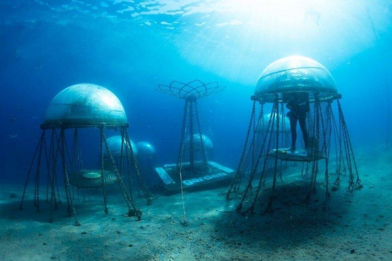 Plastic gardening pods are suspended between 4.5 to 11 metres below the surface. Credit: Nemo's Garden