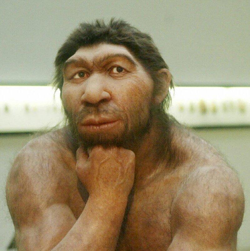 neanderthal e