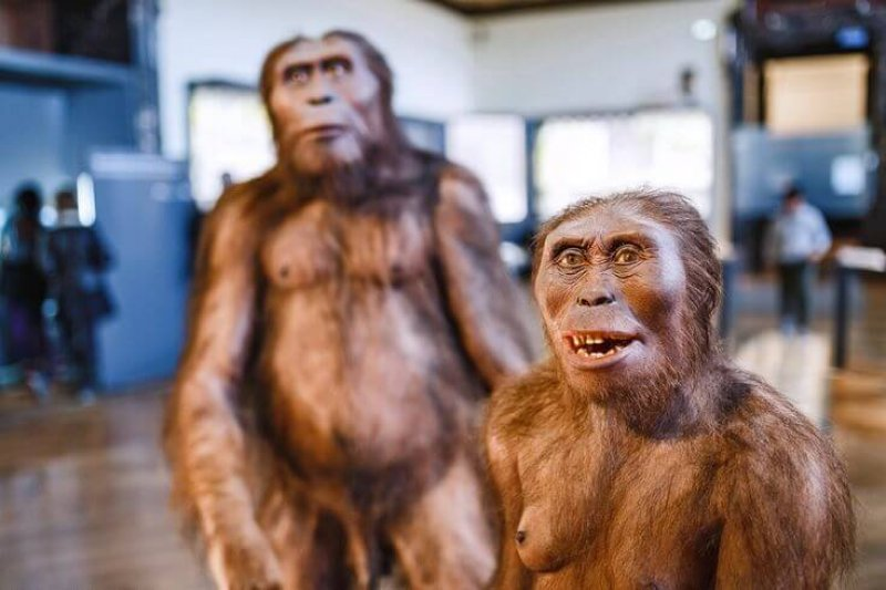A 3D rendering of Homo erectus from an exhibit at the Museum of Natural History in Vienna, Austria. Credit: Frantic00/Shutterstock