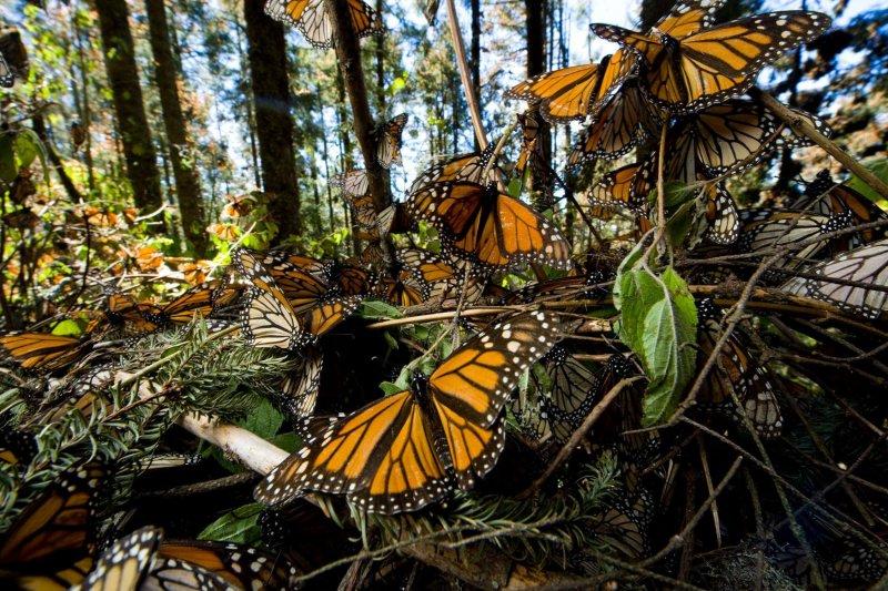 Credit: Joel Sartore/National Geographic