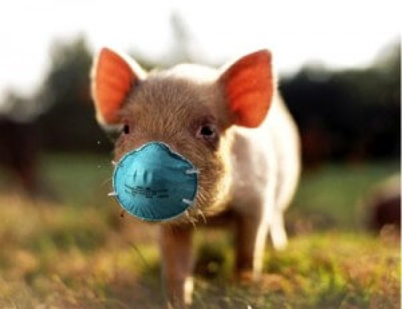pig with mask x