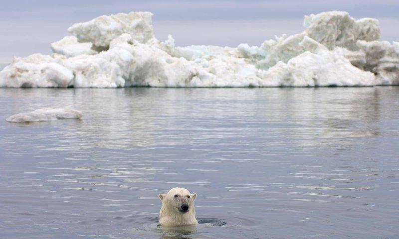 Credit: World Wildlife Fund