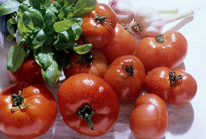 pretty gm tomatoes