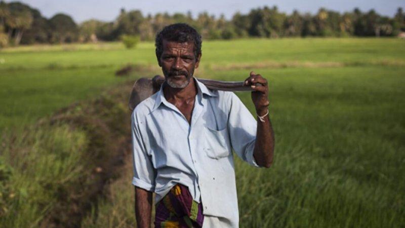 A rice farmer stands in his fields near Anuradhapura, Sri Lanka. Credit: Anna Maria Barry-Jester/Center for Public Integrity