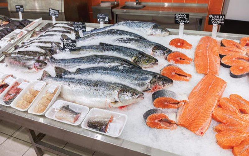 salmon jpg