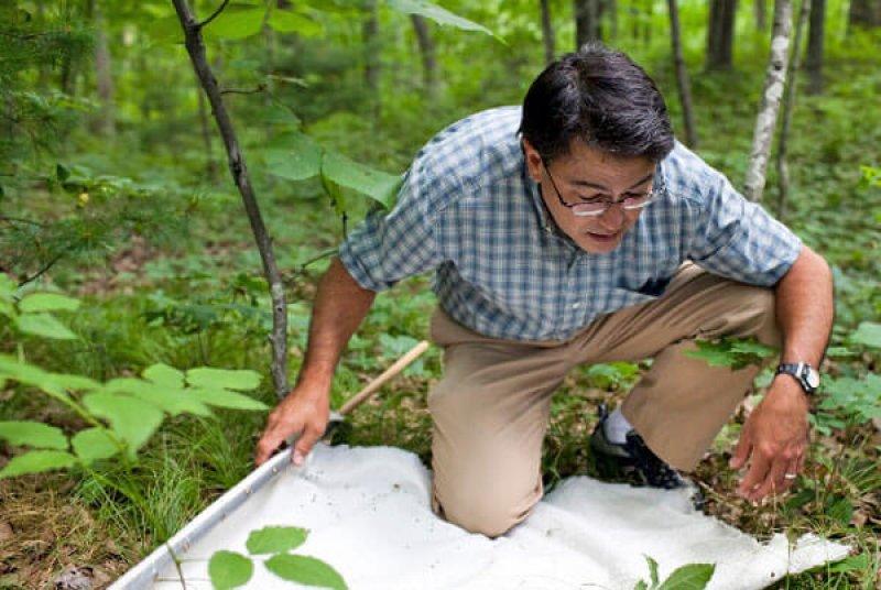 Dr. Sam Telford hunting for ticks. Credit: Grafton Villager