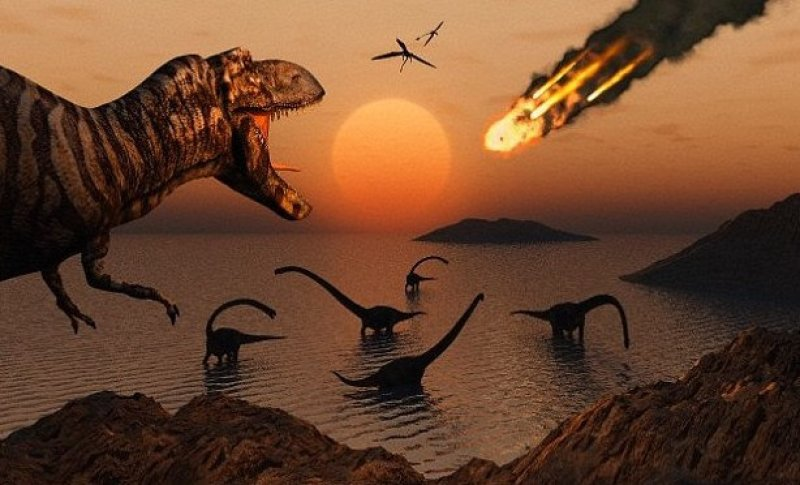 study birds had to relearn flight after meteor wiped out dinosaurs