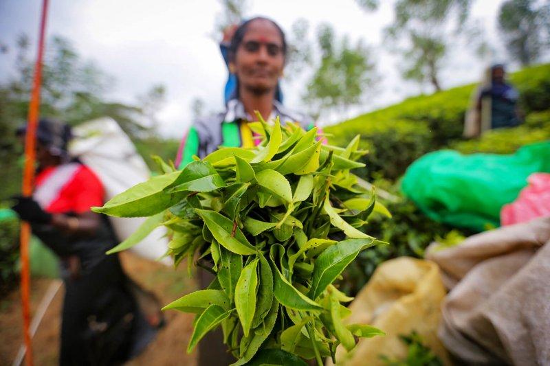 Credit: Tharaka Basnayaka/NurPhoto