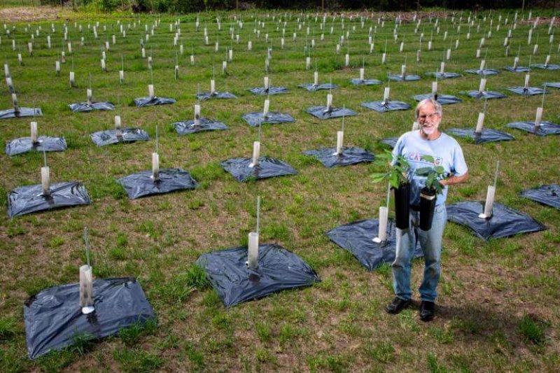 University of New England Professor Thomas Klak stands in a field of 550 fungal blight-tolerant American chestnut seedlings he helped develop in Cape Elizabeth. Credit: Troy R. Bennett/BDN
