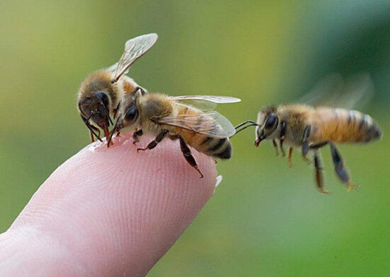 three bees finger