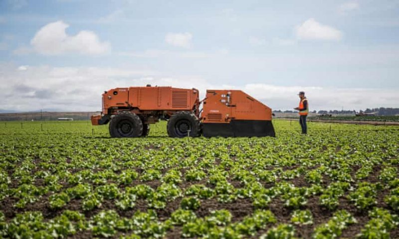 Farming robots are being used by farmers in California and Arizona. Credit: FarmWise