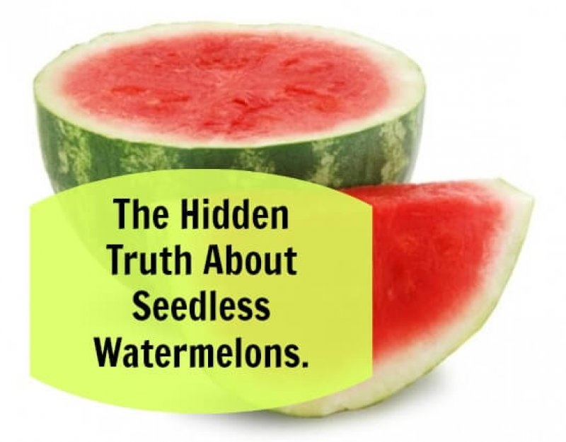 Why organic seedless watermelons could be considered GMOs--Or  chemically-created mutants | Genetic Literacy Project