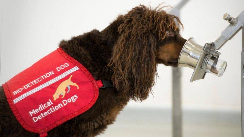Credit: Medical Detection Dogs UK