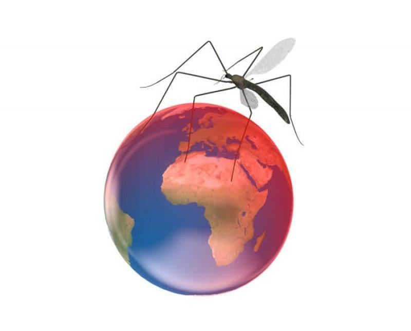 zika world